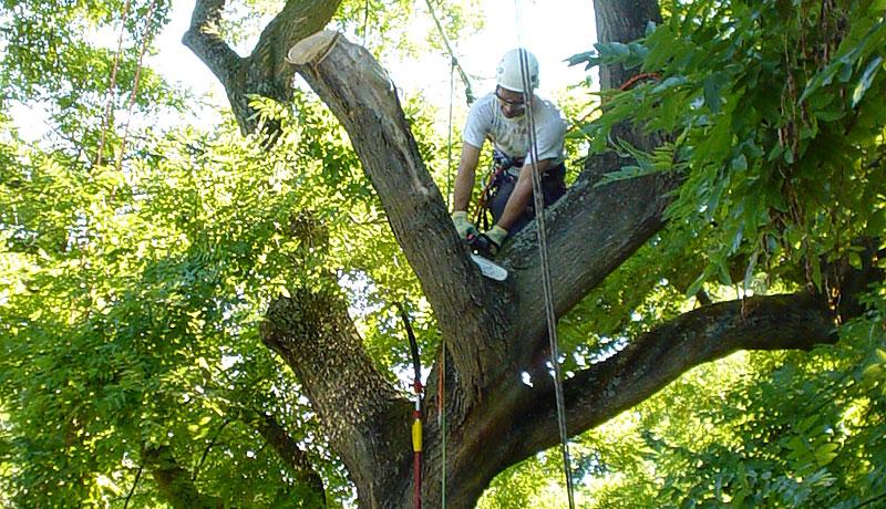 Selklettertechnik Baumfällung Baumpflege